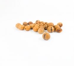 graines : palmier Brésil X25 diamètre 10mm