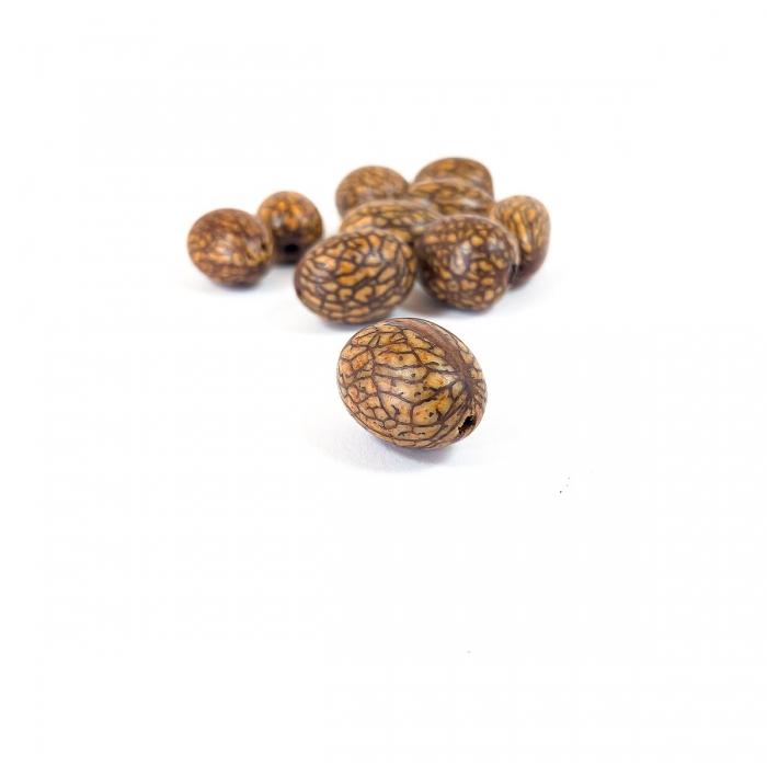 graines : palmier Brésil X10 diamètre 20mm
