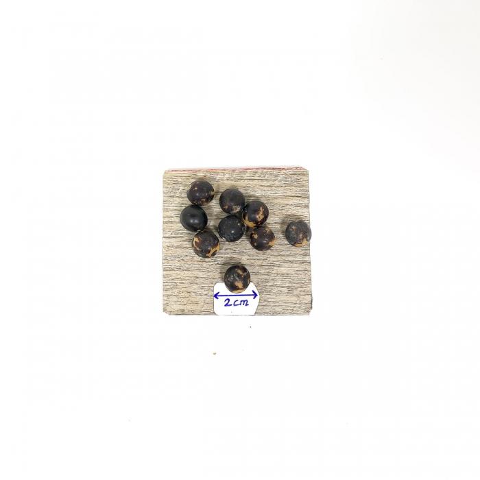 graines : palmier Brésil noir X25 diamètre 10mm