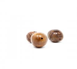 graines : palmier Brésil noir X5 diamètre 30/40mm