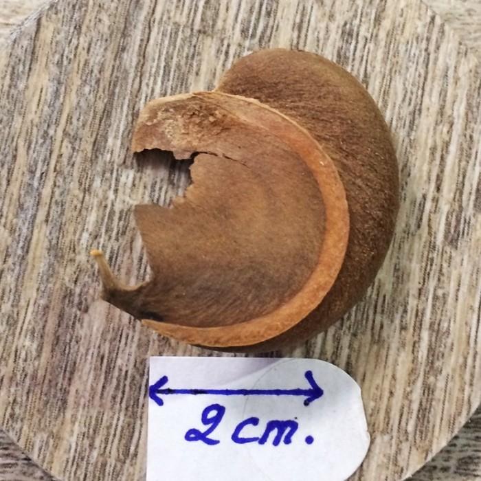 Collier carte Guadeloupe coco