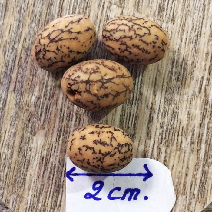 Collier graine Savonnette,coquillage, bois et hématite