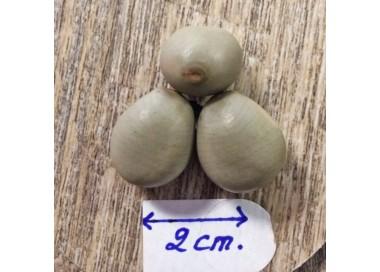 Collier graine Savonnette Coquillage, bois et hématite