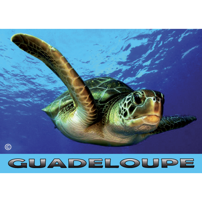 Magnet Photo - Tortue 1