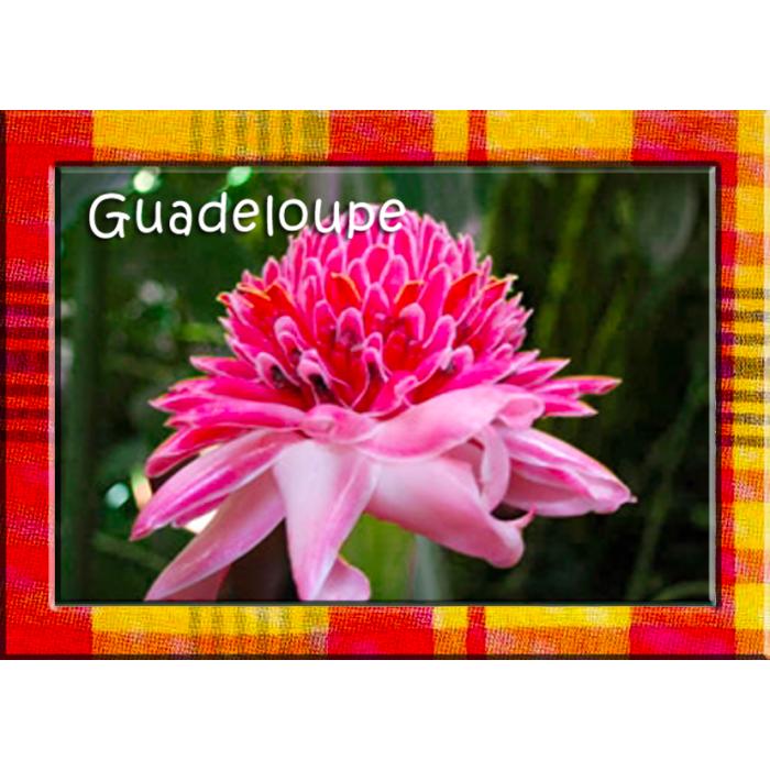Magnet : photo - contour madras - rose de Porcelaine