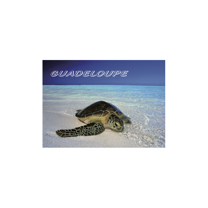 Magnet Photo - Tortue 2